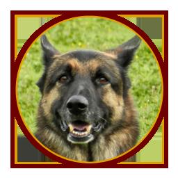 Accueil chiens « dits dangereux »